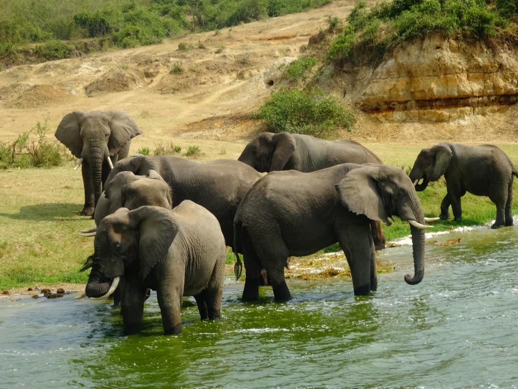 17-1-elefanten