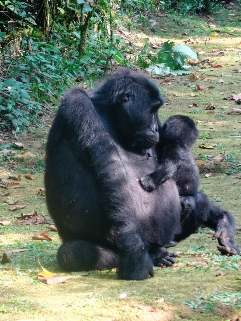 17-1-gorillababy