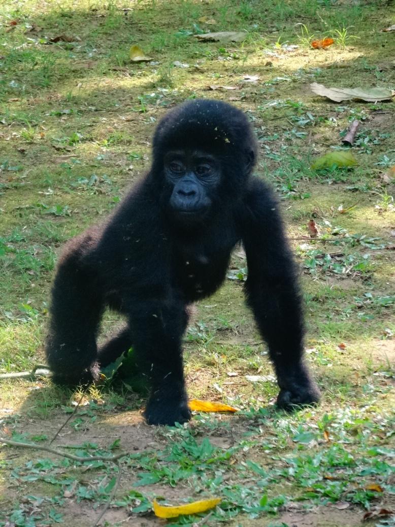 17-1-gorillababy3