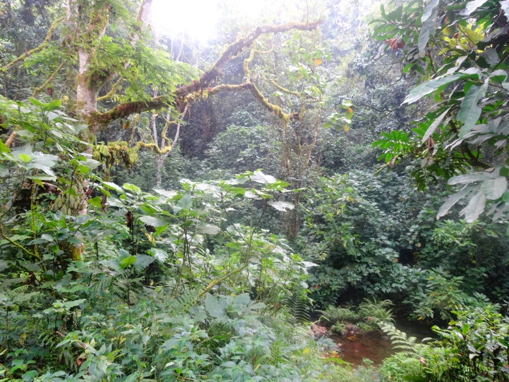 17-1-regenwald2